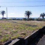 南房総(白浜)ヤシと海の風景・海岸まで40mの海の基地.スーパー70m永住も可