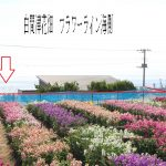 花畑 1000m(周辺)